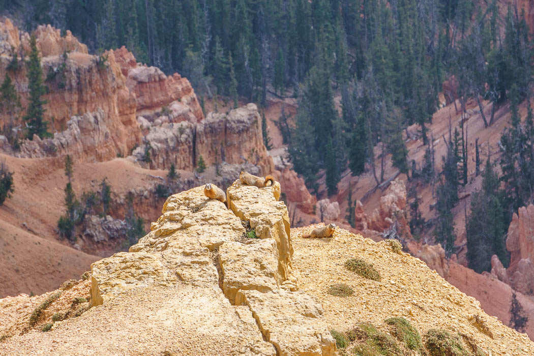 Cedar Breaks National Monument Utah-12