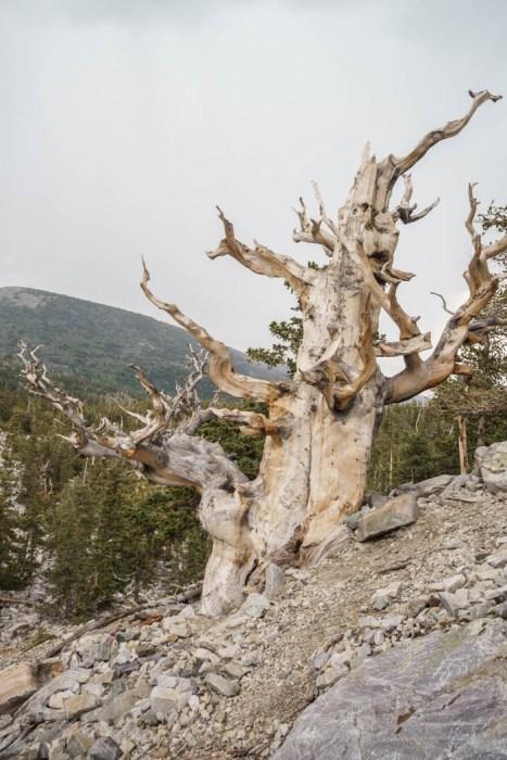 Great Basin National Park Nevada-10