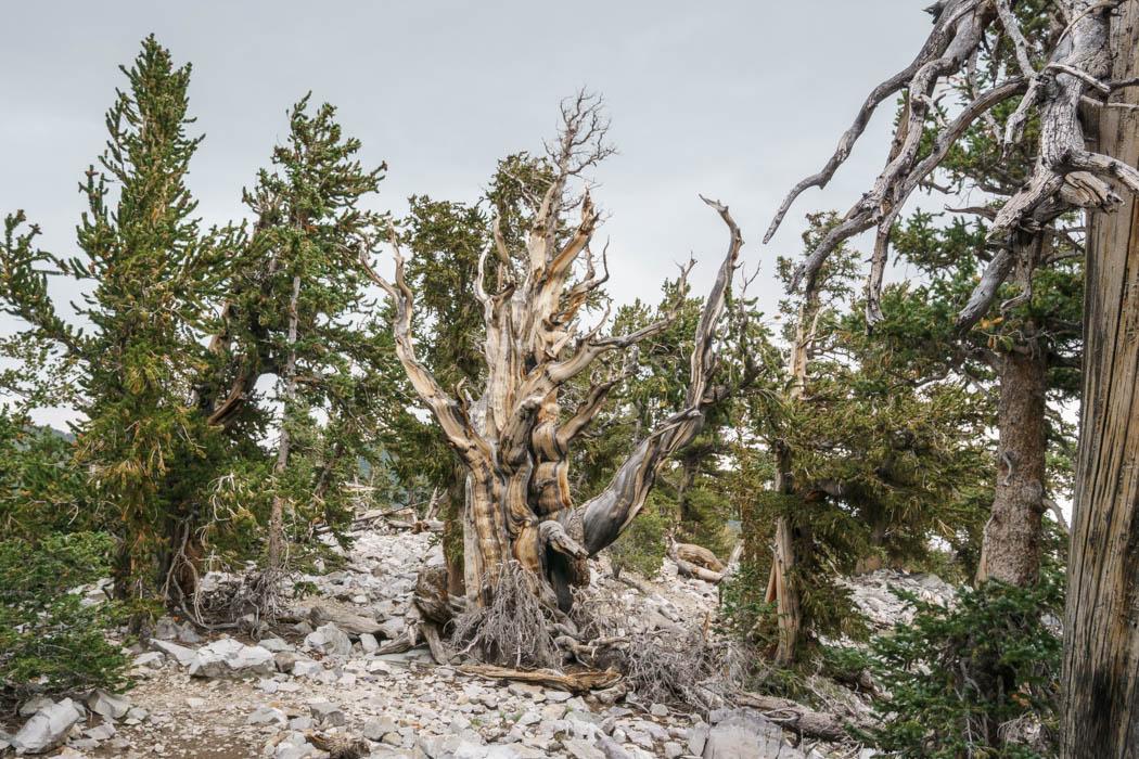 Great Basin National Park Nevada-9