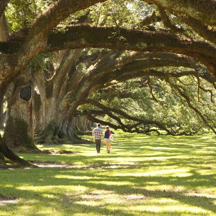 Oak alley le blog de mathilde 1