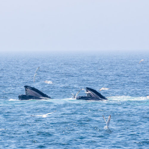 Whale watching 3 1