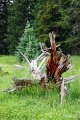 Le trône de bois.