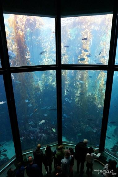 Kelp beau bassin !