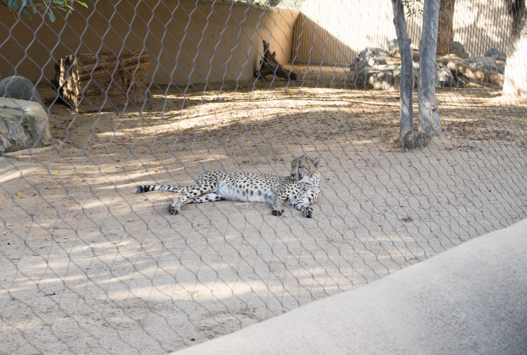 san diego zoo-8