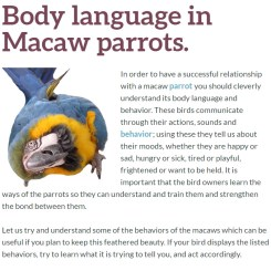 macaw facts, macaw parrot, body language