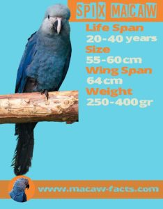 Spix Macaw, Little Blue Macaw, Macaw-Facts