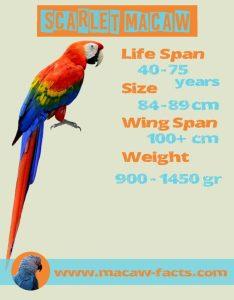 Lifespan Scarlet Macaw - Ara macao - Red Macaw