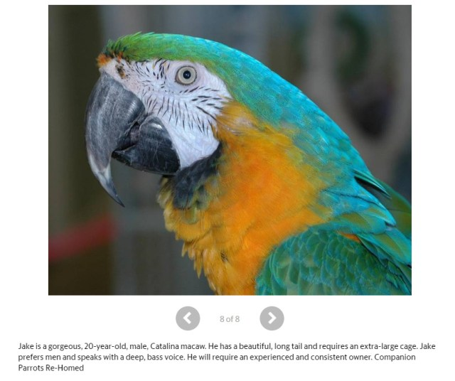 Catalina macaw 20 years old