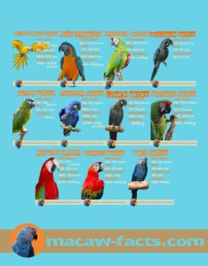 50 things to know about macaw