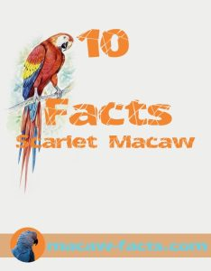 Scarlet macaw ten facts