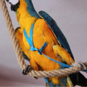 free flight harness parrot strong