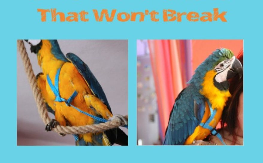 free flight parrot harness