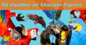 50 shades of macaw parrot