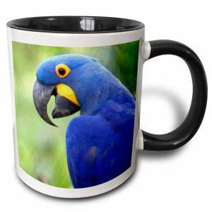 Brazil, Pantanal, endangered Hyacinth Macaw, birds