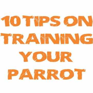 Macaw Parrot training