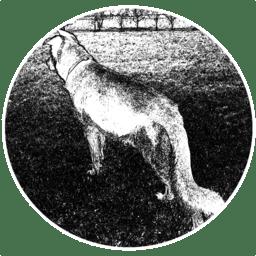 Wolf 1.34.8