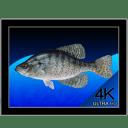 Aquarium 4K 1.0.3