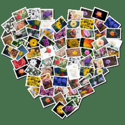 FigrCollage 2.5.11