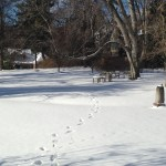 Winter Gardens of Macculloch Hall Historical Museum, Morristown, New Jersey / Group Tours