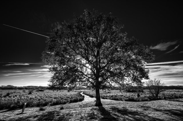 Fen Ley Lines- Leica M10 with 16-18-21mm f4 Wide Angle Tri Elmar 1/125th ISO 100