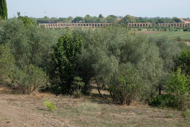 The olive garden with the Anio Novus viaduct in the distance