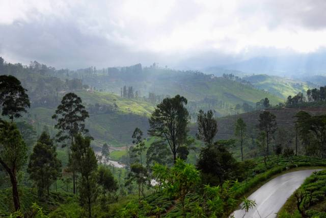 Tea country, view from the train