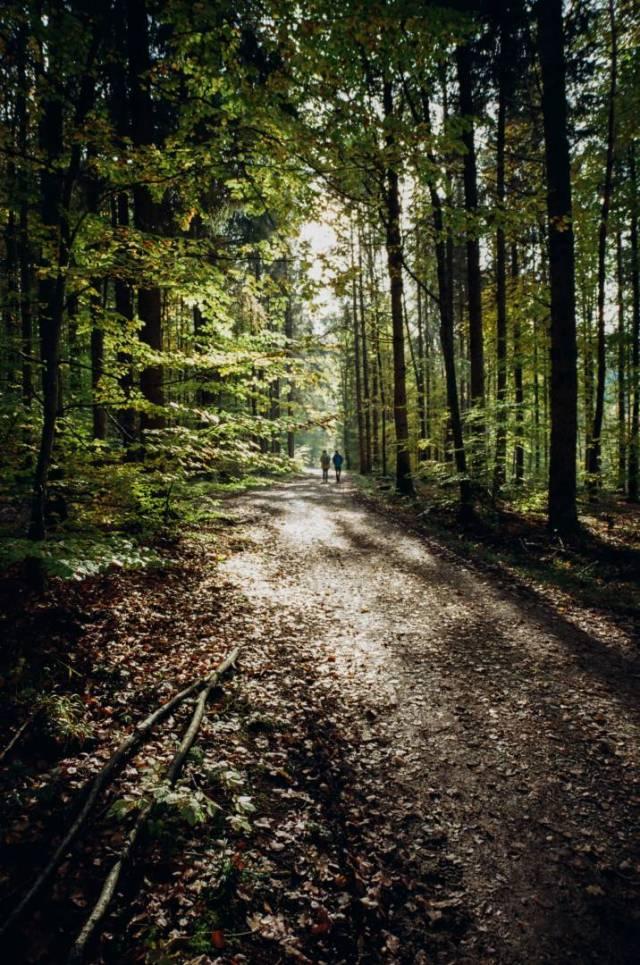 Autumn forest near Constance. BessaR4M, Voigtländer Color-Skopar 21/4.0. Kodak ProImage100.
