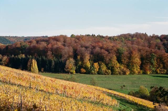 Wine and wood near Malterdingen, South West Germany. Konica Hexar RF with Konica M-Hexanon 50/2. Kodak Ektar 100.