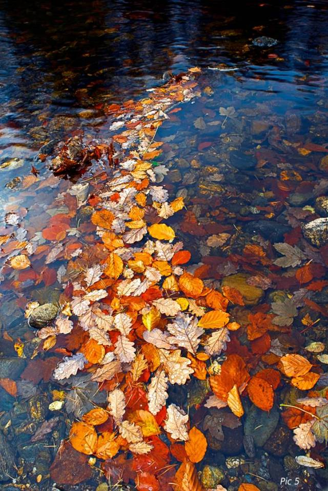 """Beech leaves - """"In following the cry from the wilderness, Life became a quest for the shadow, for a hint of a meaning of infinity"""""""
