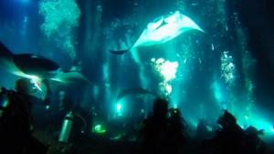 ハワイのマンタツアーでダイビングしながらプランクトンを食べるマンタを見ている写真