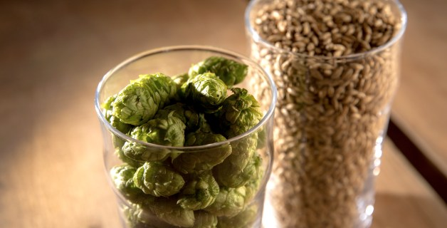 Fresh Simcoe hops