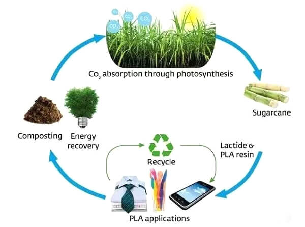 Biodegradable Plastics