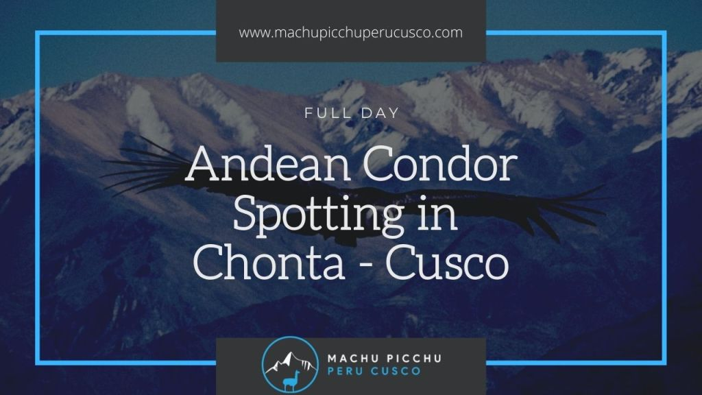 Condor Spotting Tour in Chonta Cusco