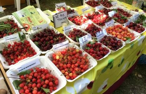 Les croqueurs de pommes de Provence aux Journées d'Albertas