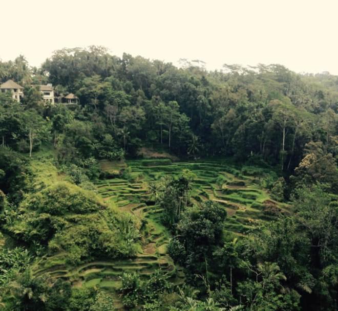 Island Travel Bali Indonesia