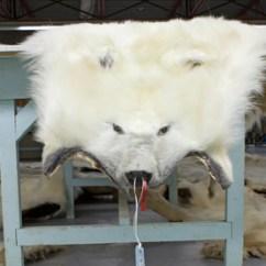 Polar Bear Diagram Healthy Diet Fur