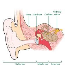 the ear [ 900 x 1026 Pixel ]