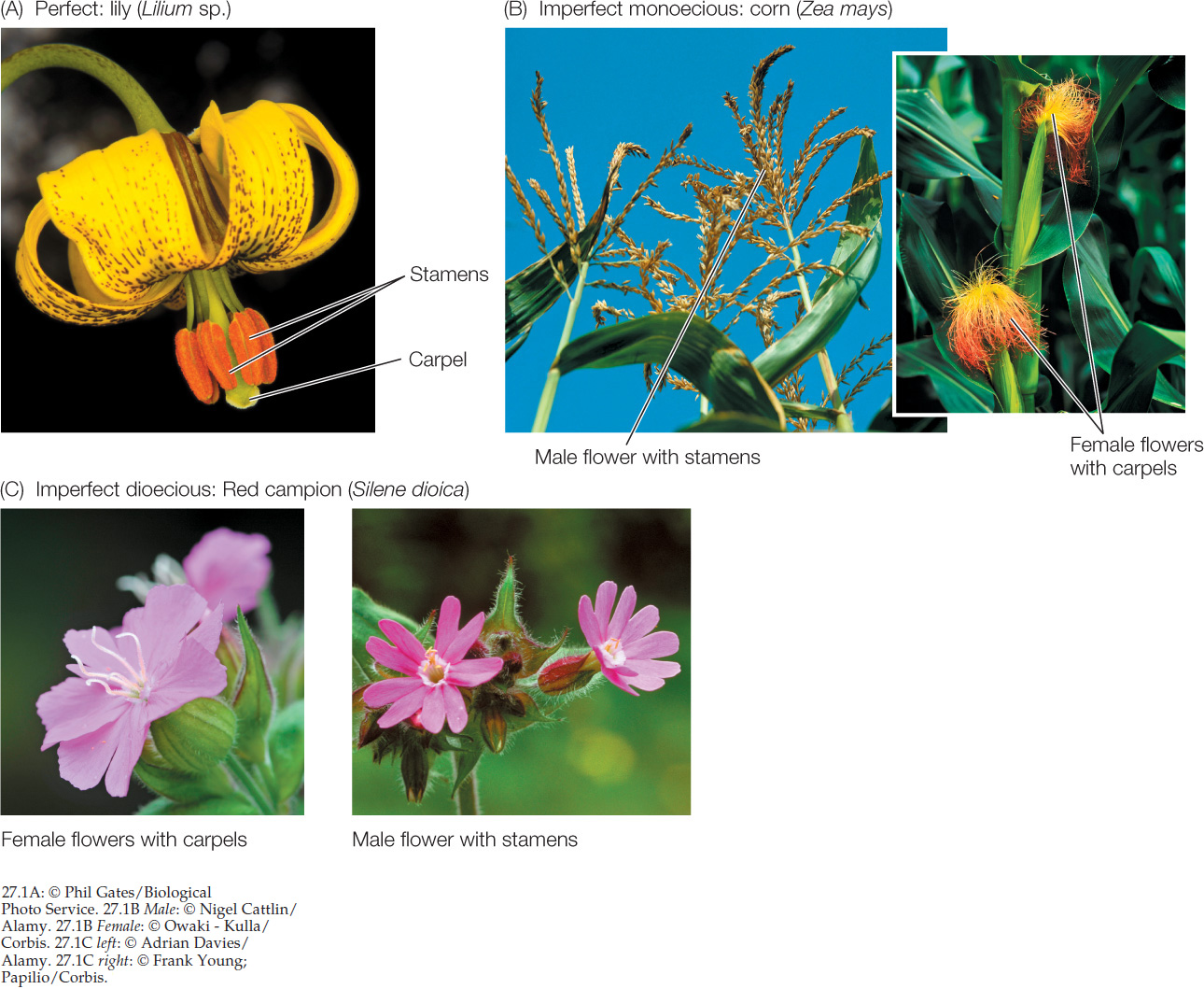 diagram of perfect flower lily car audio amplifier wiring and imperfect flowers ideas for review
