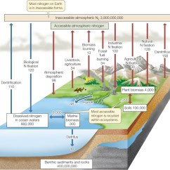 Water Ecosystem Diagram Honda Accord Exhaust System Hillis2e Ch45