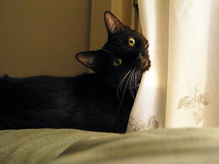 Jinx looks at camera twisting her head from behind a curtain