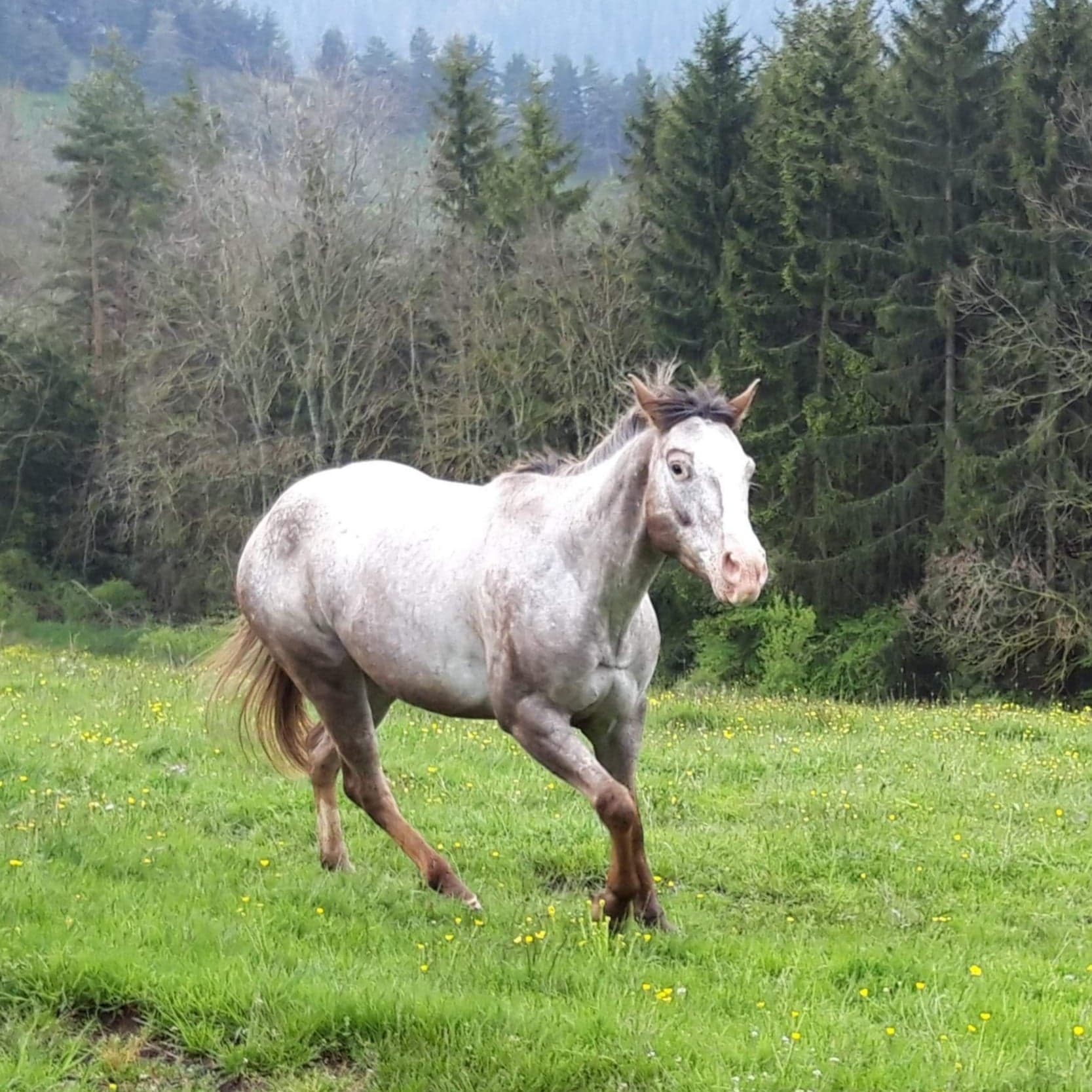 elevage chevaux equitation western en auvergne rhone alpes