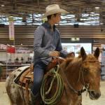 elevage chevaux equitation western en auvergne