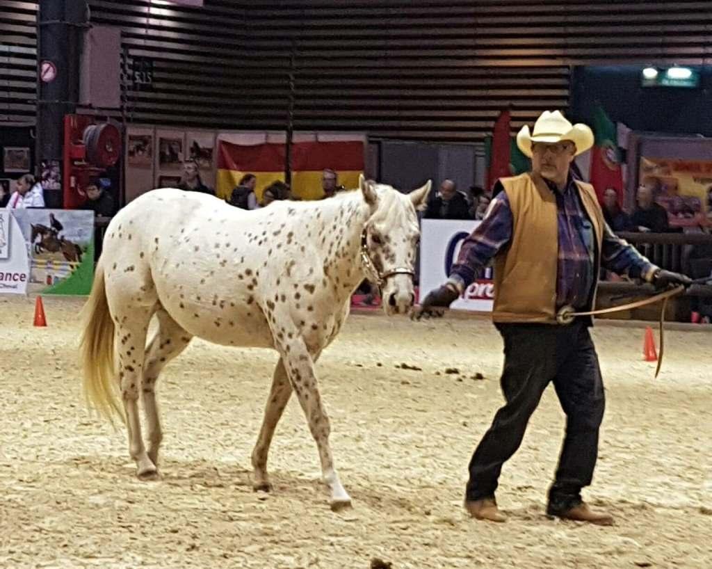 le poney des amériques à equita lyon