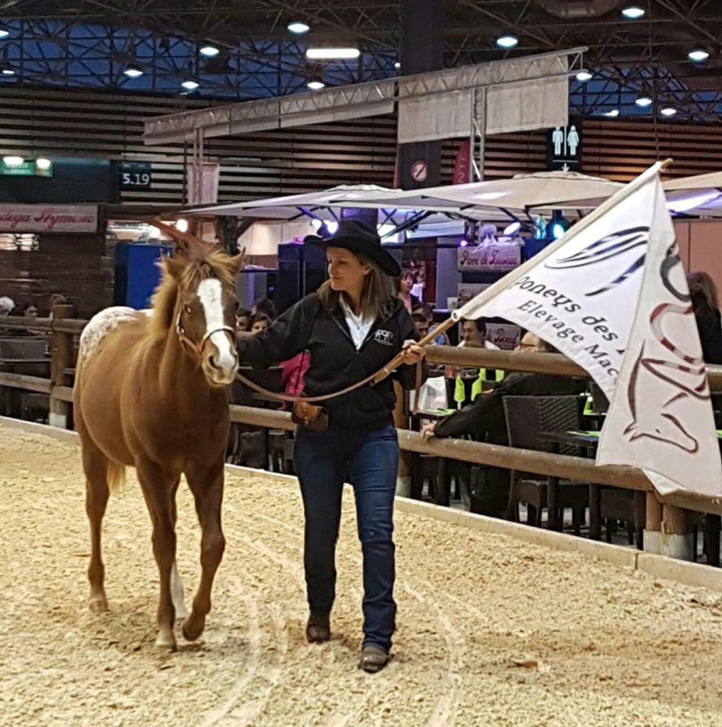 acheter un poney des amériques en haute loire