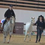 equitation western elevage de chevaux en auvergne