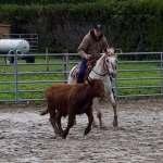 poulain poney des amériques haute loire