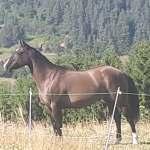 chevaux equitation western en haute loire