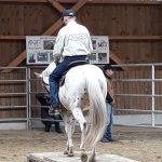 etalon poney des amériques en auvergne