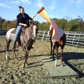 chevaux pour équitation western à vendre au puy en velay
