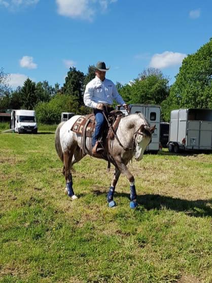cheval à vendre haute loire